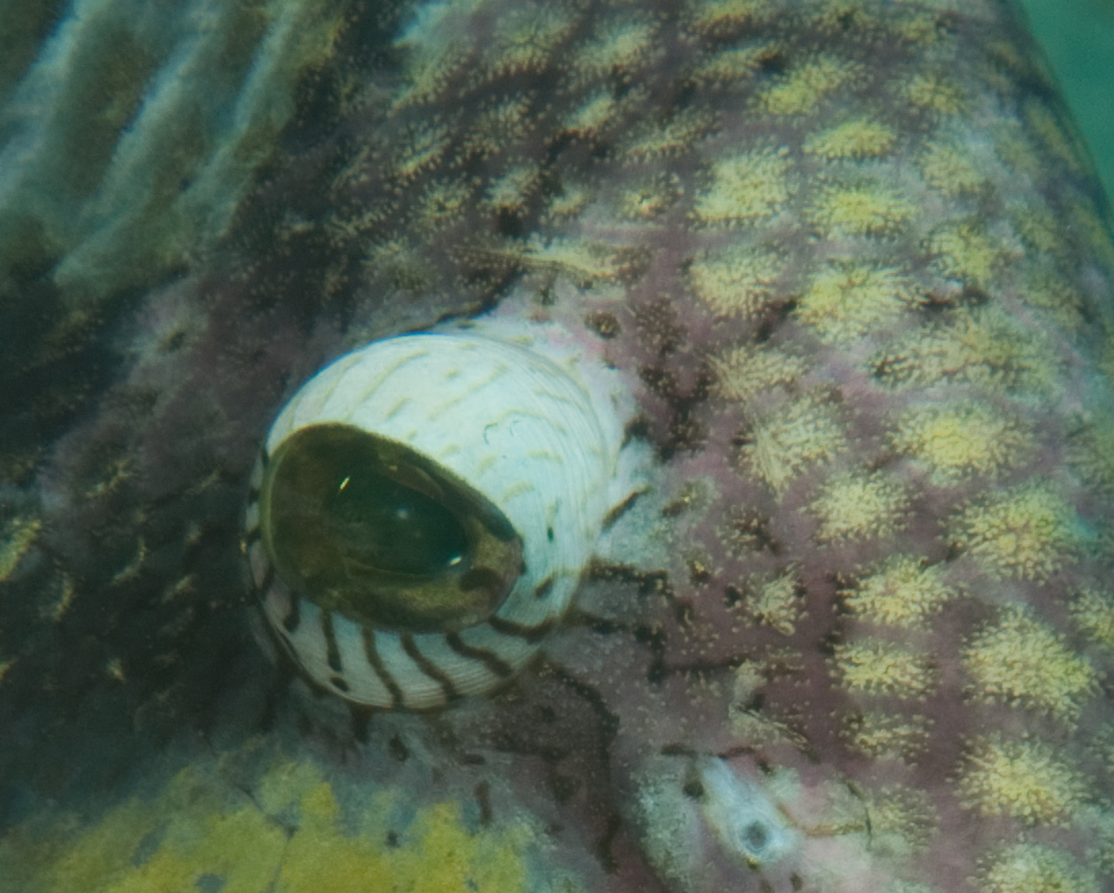 Australian_Diving/DSC_0018.jpg